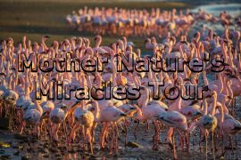 Mother Nature's Miracles Tour Walvis Bay