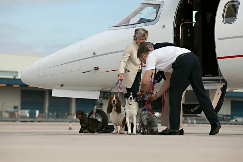 Victor Pets on Jets Furs Class