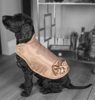 World's Most Expensive Dog Jacket