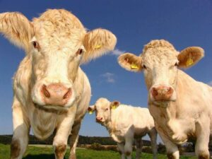 New Zealand's dairy, eggs, honey, and meat products alone rake in US$15.4 billion and make up 40% of total exports.