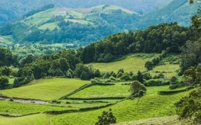 How to Buy a Coffee Farm or Plantation in Colombia?