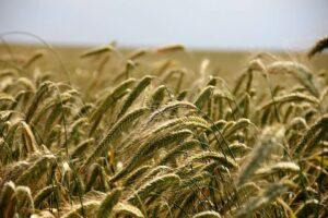 Argentina Invest agriculture