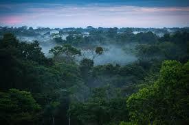 Brazil mining amazon