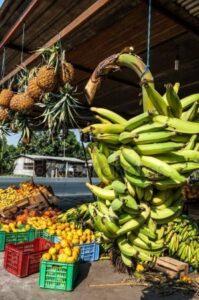 ¿Cómo incorporar una empresa de exportación de bananas en Ecuador?