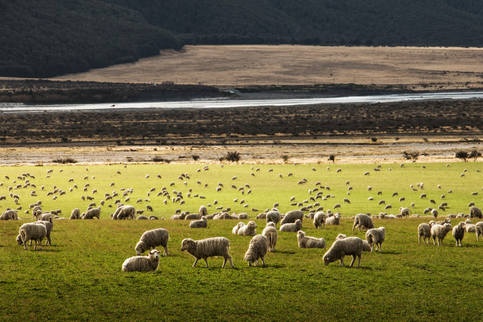 Beneficios Comerciales entre Nueva Zelanda y América Latina