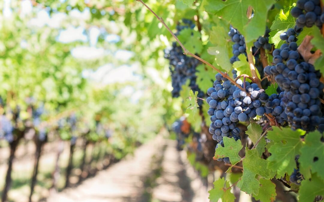 Opportunities to Export New Zealand Wine to Latin America