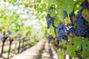 latin america new zealand wine