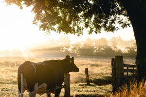 agriculture livestock mexico new zealand australia