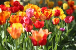 Cut flowers are of increasing interest to investors
