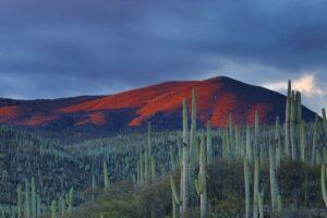 Mexico diverse reserves