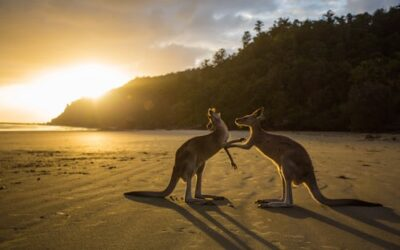 Australia's Growing Tourism Sector Hides a Wealth of Opportunities