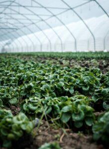 Agriculture Uruguay