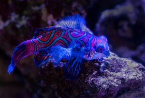 Cairns Aquarium Australia