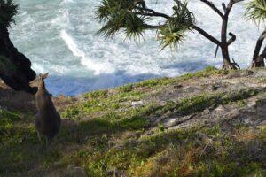 Australian ecotourism
