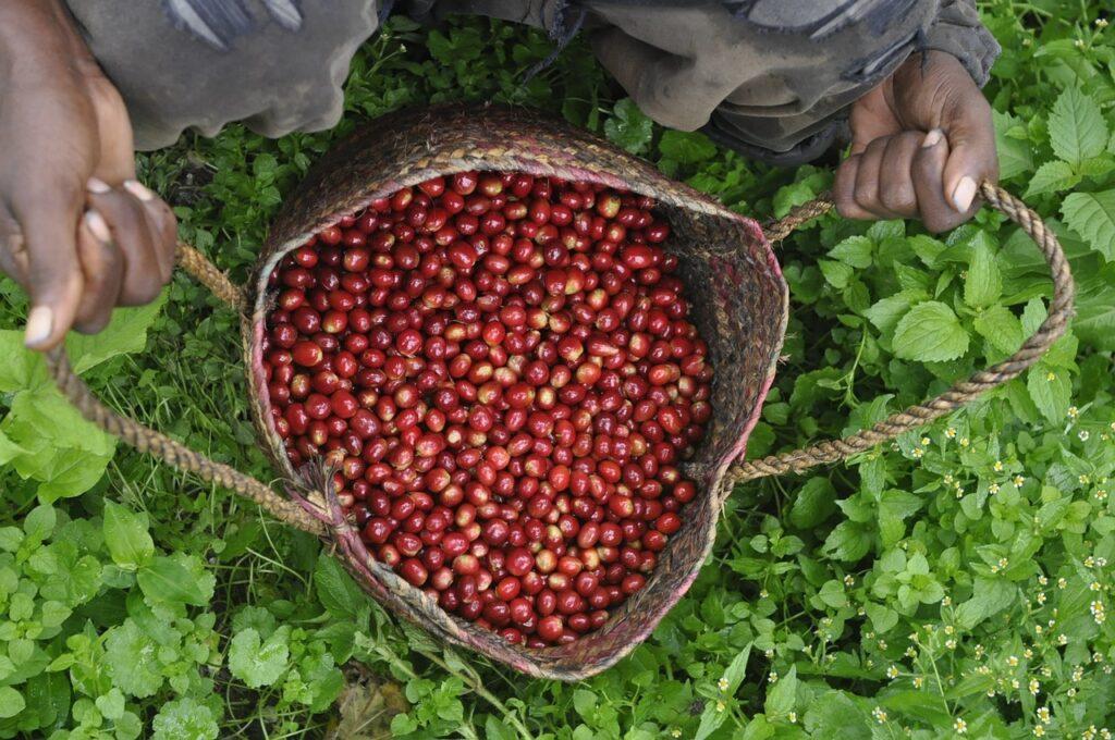 bolsa de granos de cafe agrinegocios brasil