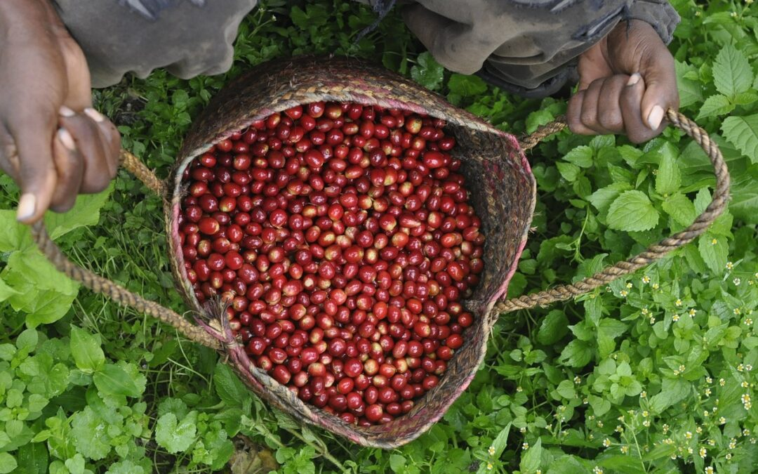 How Digitalization Could Boost Colombia's Coffee Production