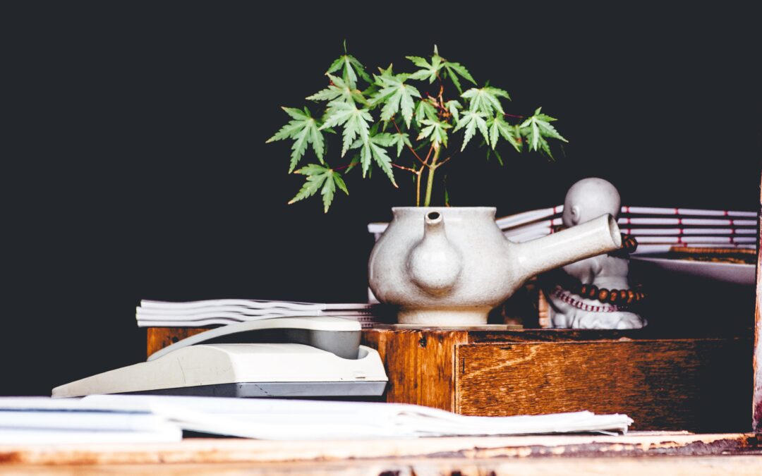 Understanding the Latin American Cannabis Sector