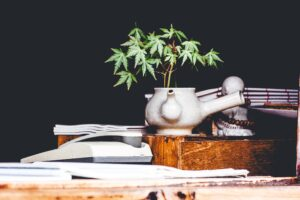 This framework allows natural and legal persons access the industry of cannabis through 4 types of licenses: