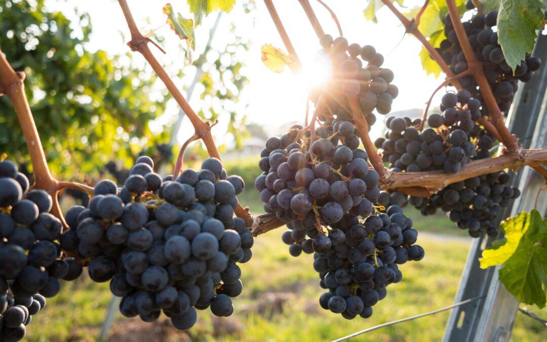 Innovation Boosts Australia's Wine Industry