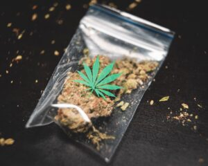 Cannabis exportation guidelines