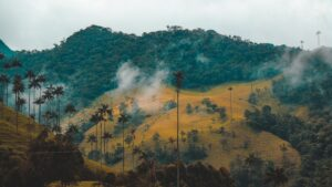 Colombia Cocora Valley
