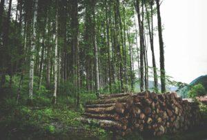 Uruguay forestry top export