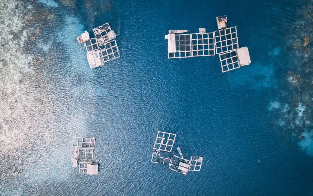 Business Opportunities for Aquaculture in Latin America