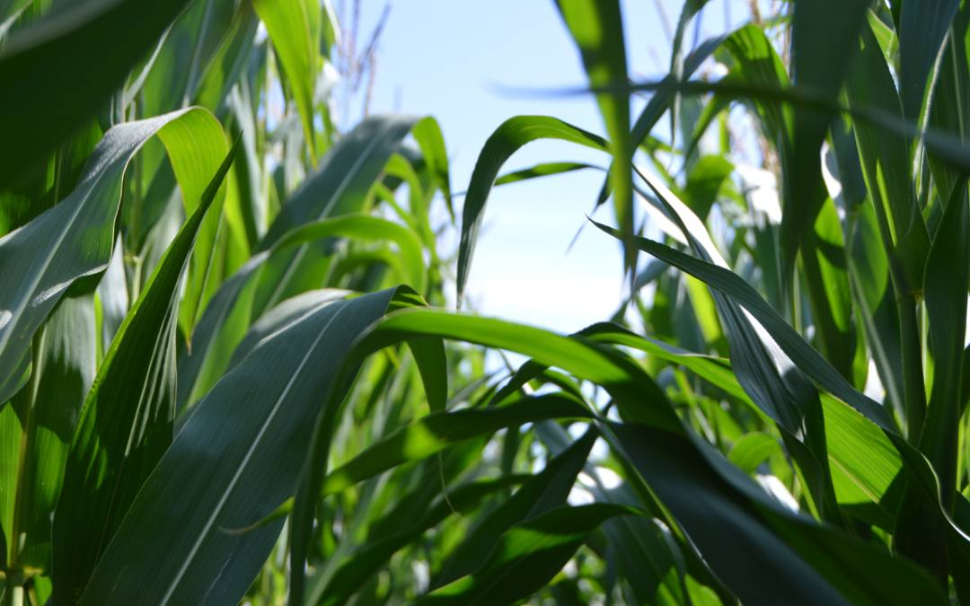 Overview of Agribusiness Opportunities in Brazil