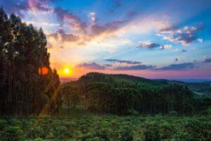 uma fotografia da selva no brasil