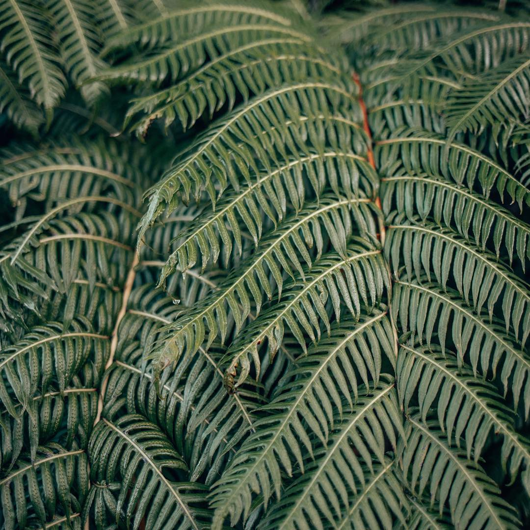 Closeup of ferns at Caldeira Velha