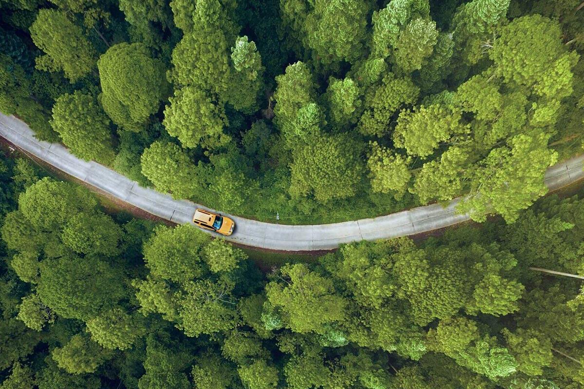 scenic-green-road