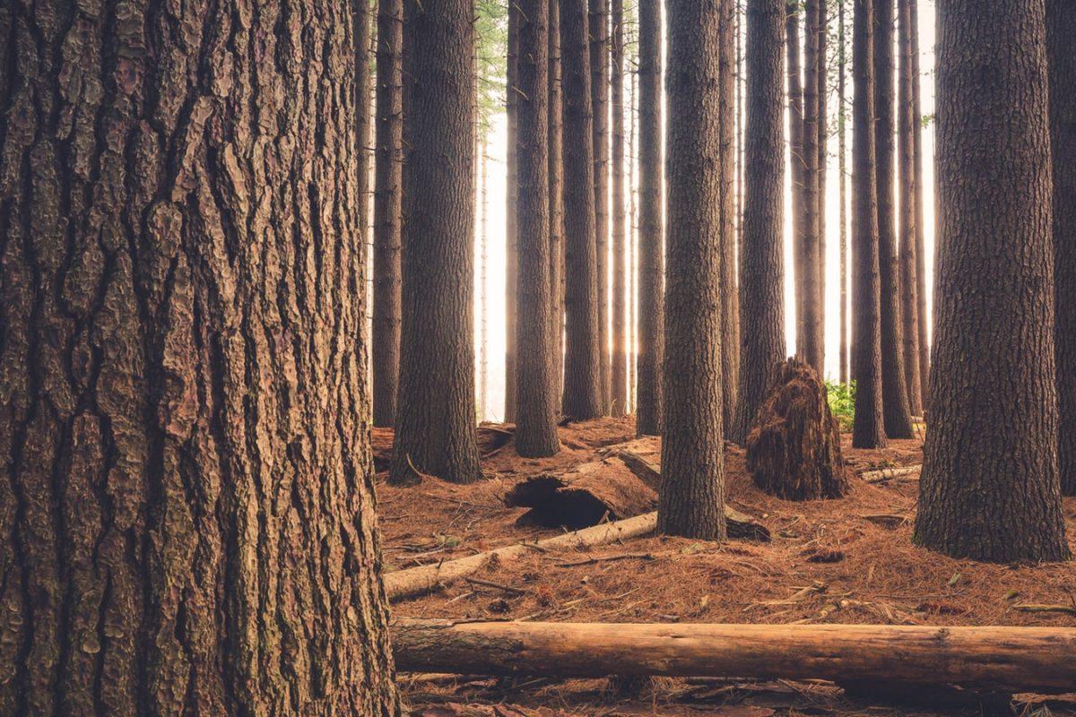 アコギにはどんな木材が使われている?違いを解説!