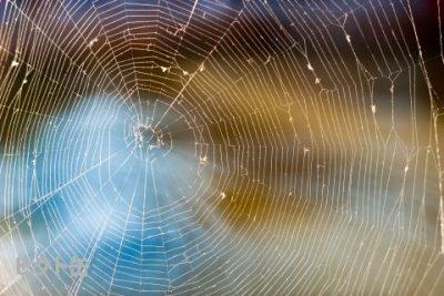 雨の日はきっとこんな風にーindigo la End「sweet spider」