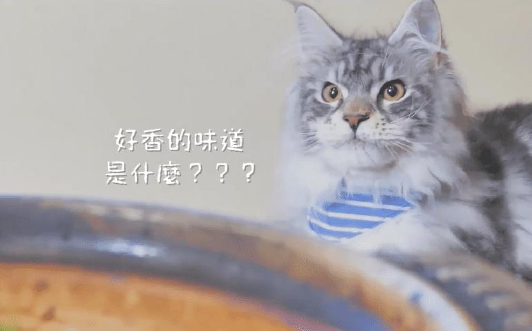 【名古屋喵喵團】尋找美味 味噌烏龍麵
