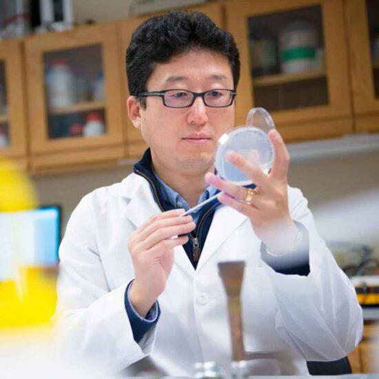 Chemist inspecting petri dish in a lab