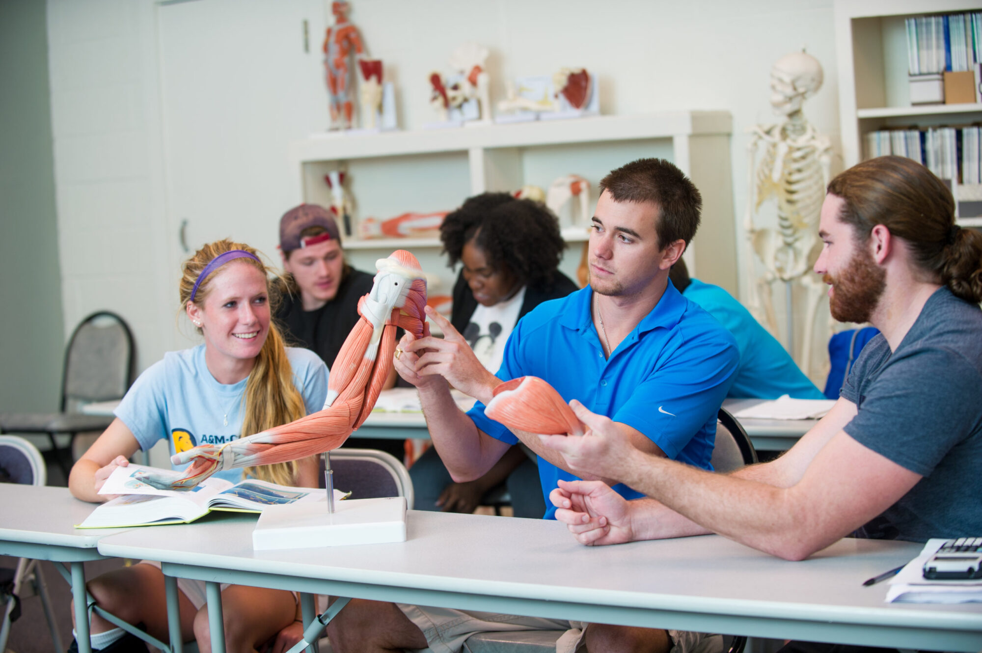 Students inspecting a skeleton with muscle structure.