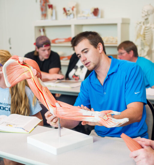 Student studying the anatomy of a muscle skeletal arm.