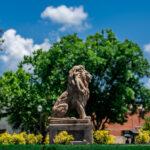 TAMUC LION