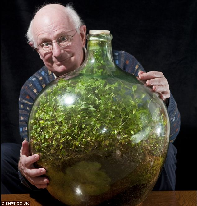 This Garden In A Bottle Has Been Thriving Since 1960: Sealed in its own ecosystem and watered just once in 53 years