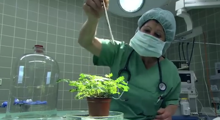 Do Plants Respond To Pain? Scientists Conduct An Experiment To Find Out