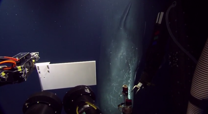 Very Rare HD Video Captures Sperm Whale In Deep Sea