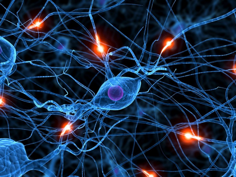 12 Major Neurotoxins That Effect Our Brain