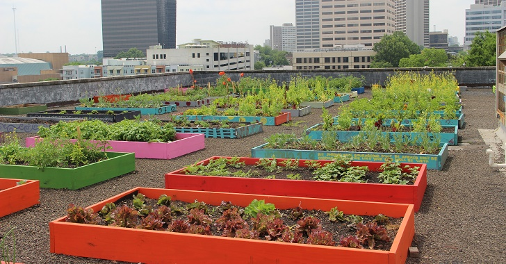 Homeless People Plant a Rooftop Organic Garden, Help Feed an Entire Shelter