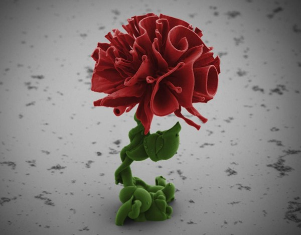 Harvard Scientist Grows Microscopic Flowers