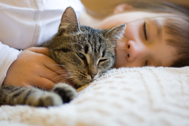 The Amazing Healing Power Of A Cats Purr