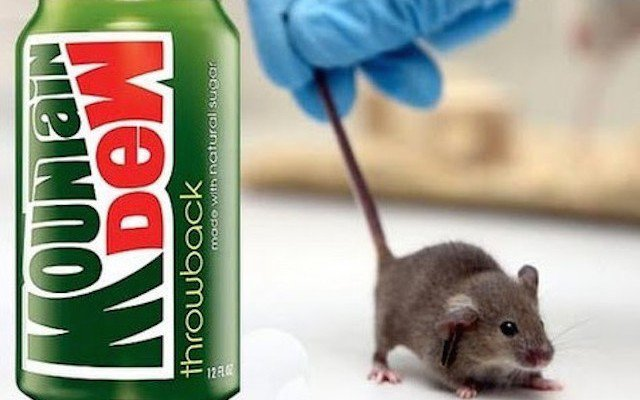 What Happens When A Mouse Is Put In Mountain Dew For 30 Days — Now Think About Your Body