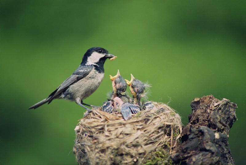 Respect the Nest