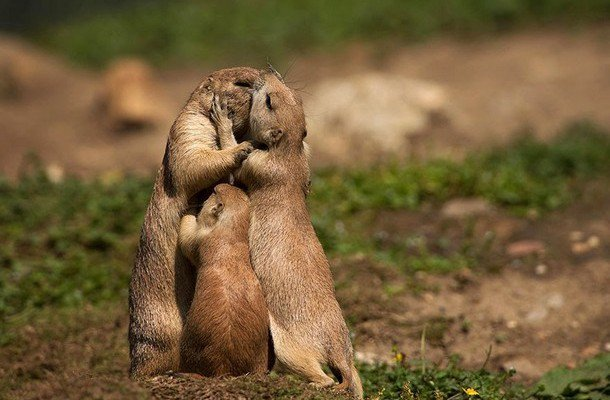 16 Of The Most Precious Parenting Moments In The Animal Kingdom