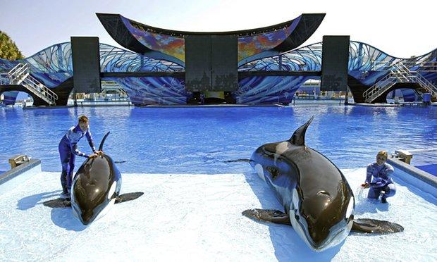 SeaWorld Sees Massive Profit Drop: Customers Boycott Whale Captivity