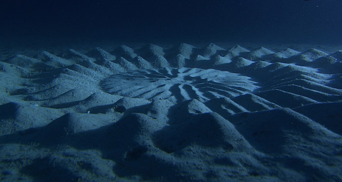 Pufferfish Creates Mysterious 'Crop Circle' Formations in the Sand